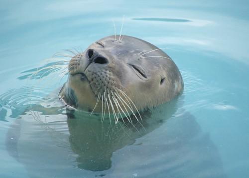 Natureland Seal Sanctuary, Skegness