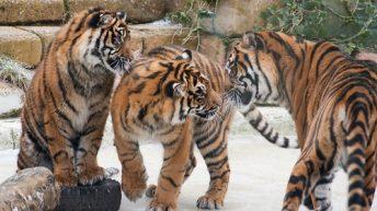 Chessington Zoo